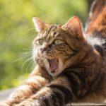 gatito con pereza