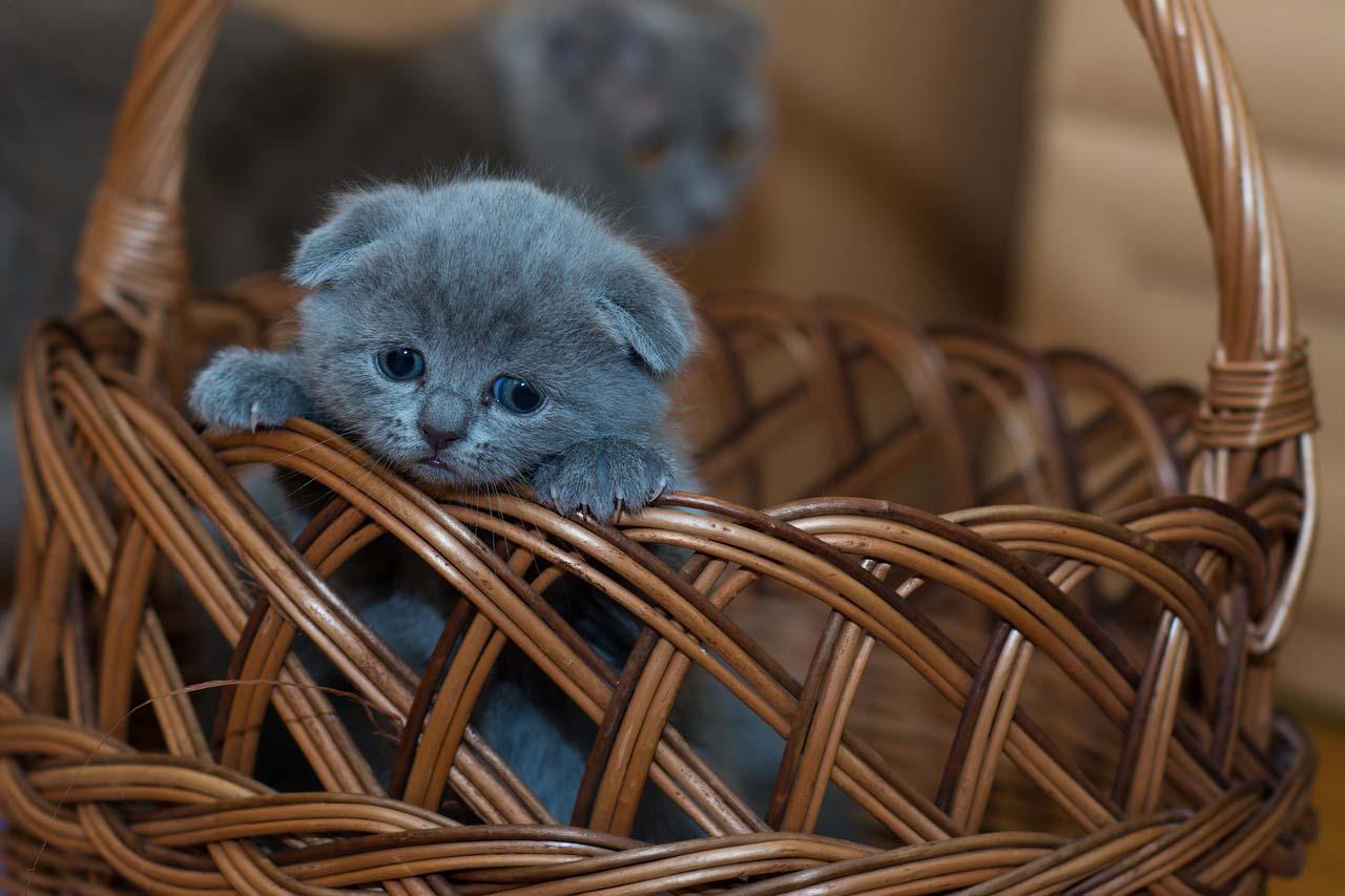 Gatito en una canasta