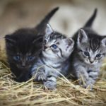 Gatitos en el campo