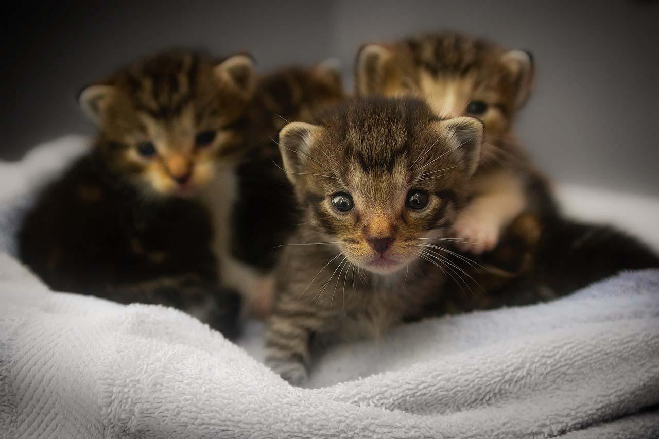 Gatitos en la cama