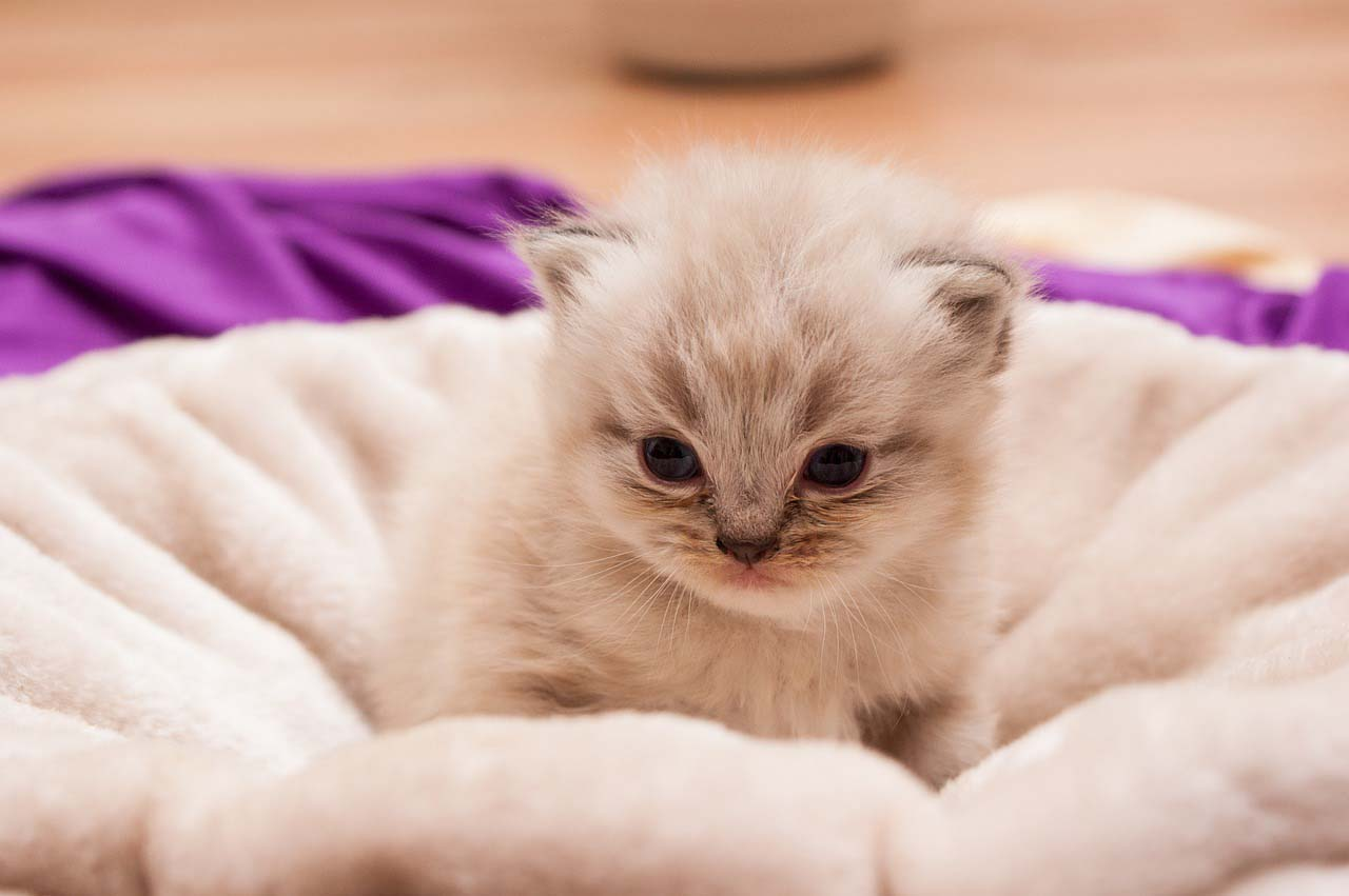 Gato bebe en la cama