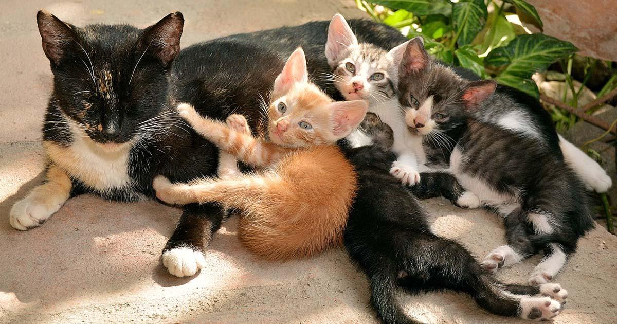 mamá con sus gatitos
