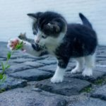 Minino jugando con una flor