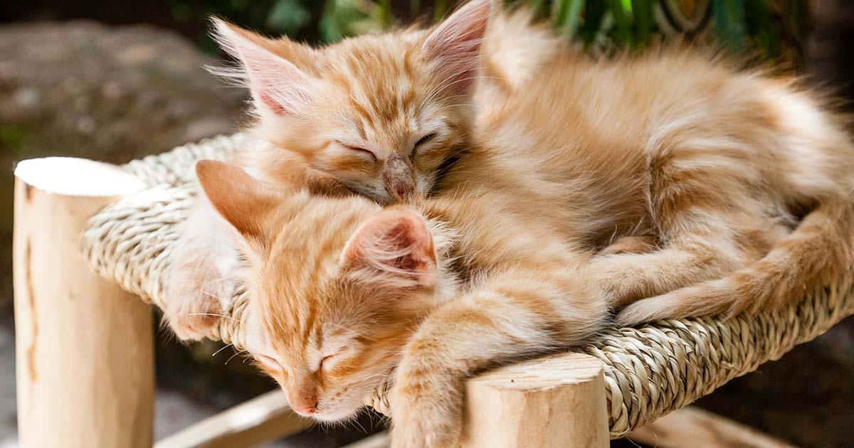 mininos durmiendo