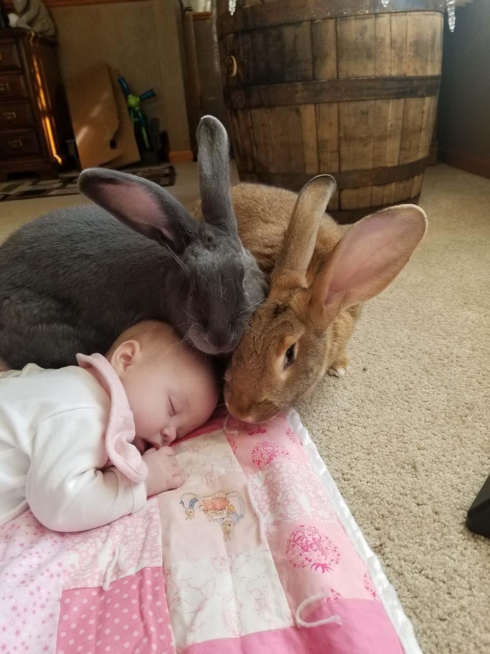 par de conejos cuidan a su bebe humana