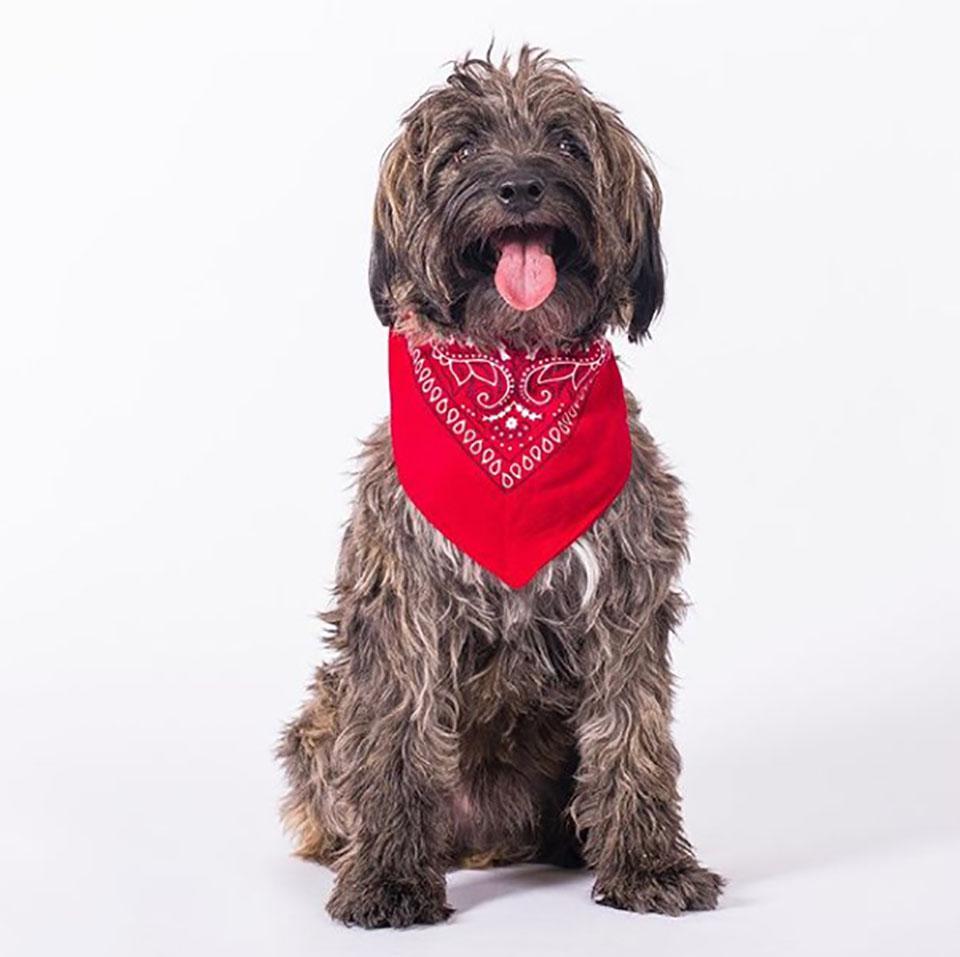 perrito con prenda roja