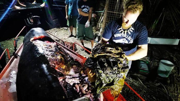 40 kilogramos de plástico es encontrado dentro de una ballena