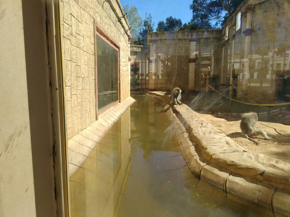 Agua estancada en zoo