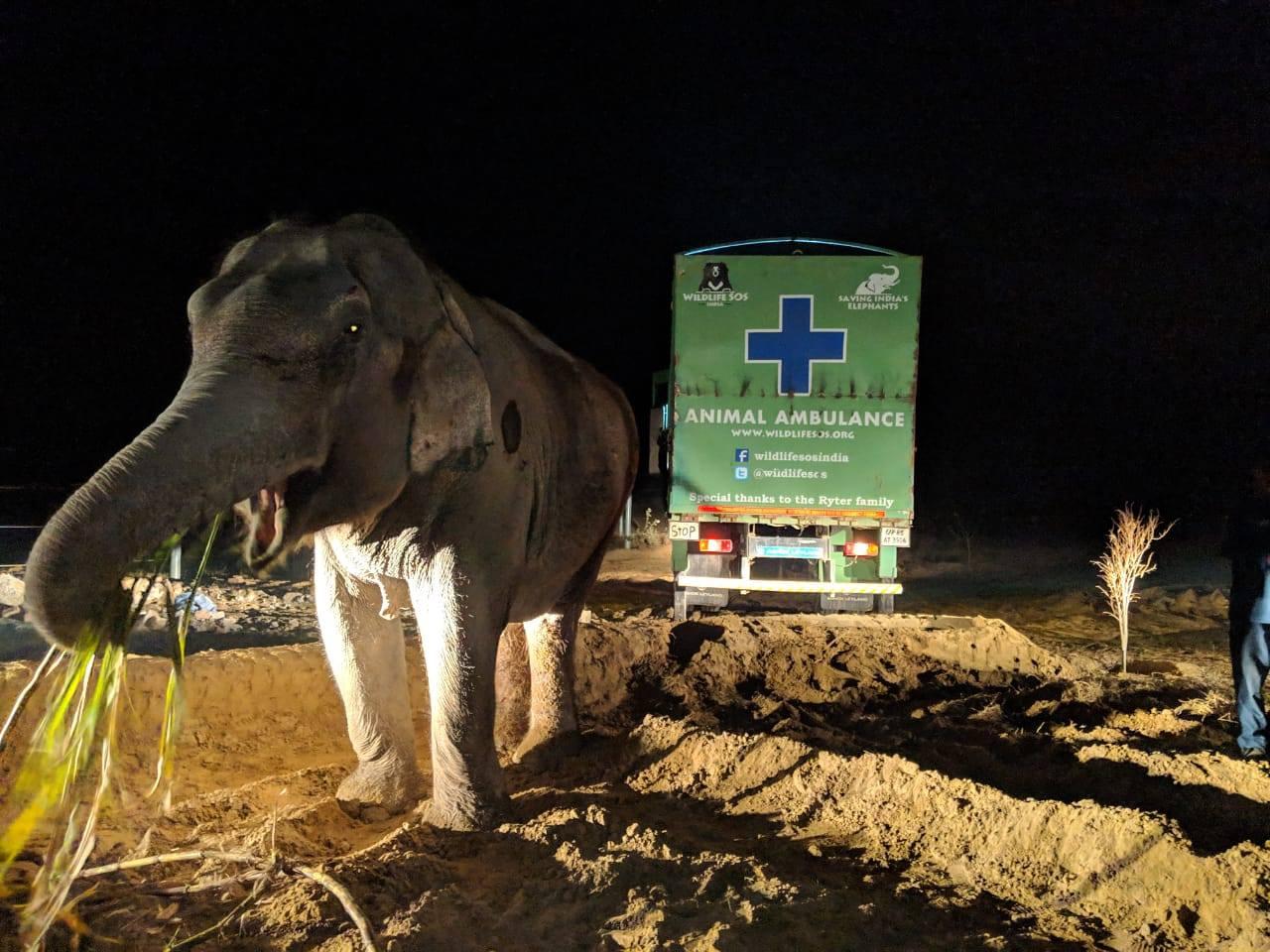 Ambulancia para elefantes