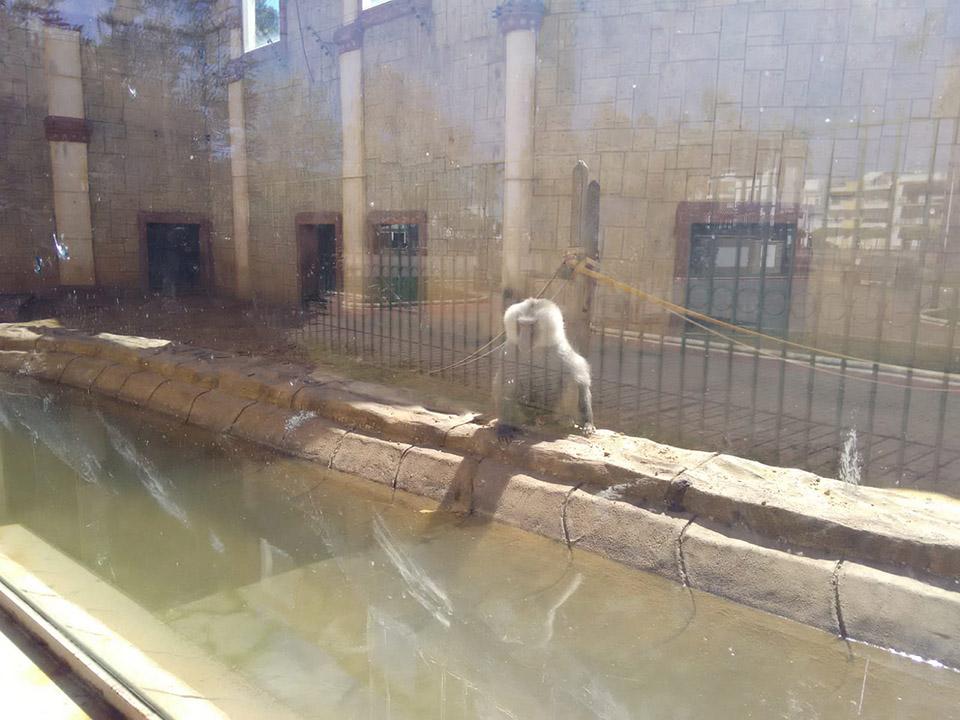 Animales abandonados en zoo de España