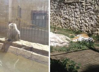 Animales abandonados en zoológico de España