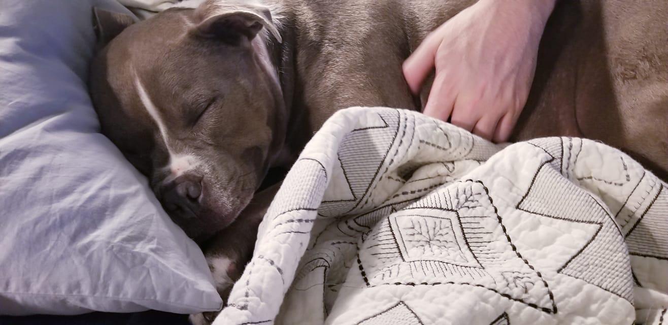 Bailey durmiendo