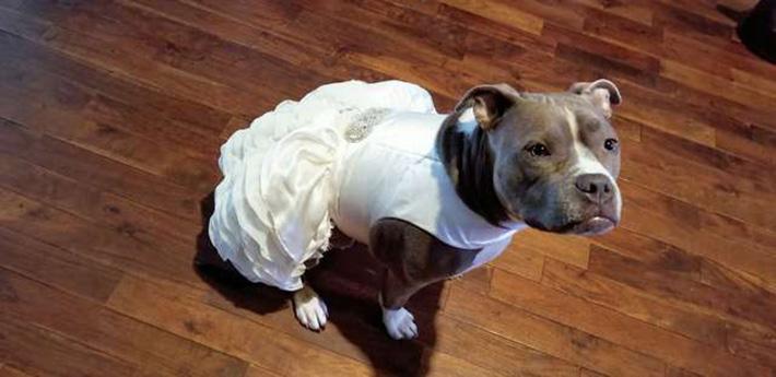 Bailey y su vestido