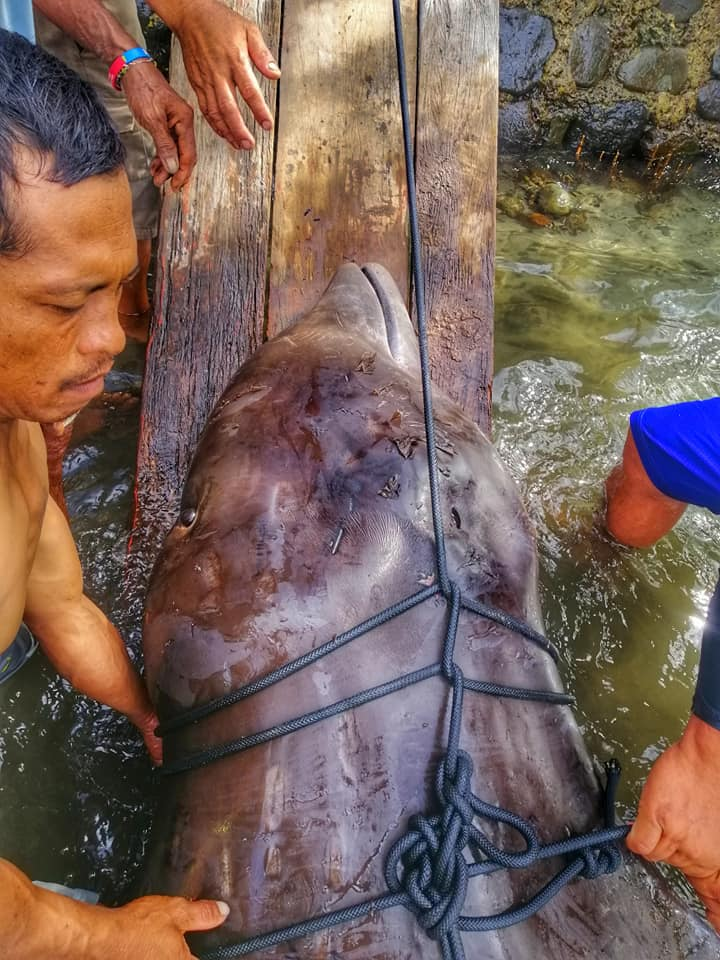 Ballena encontrada en Filipinas