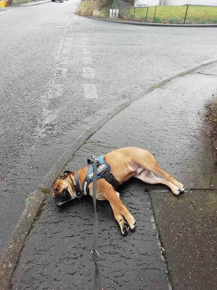 Begbie en el suelo