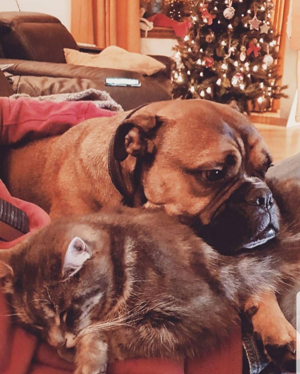 Begbie y su hermano gato