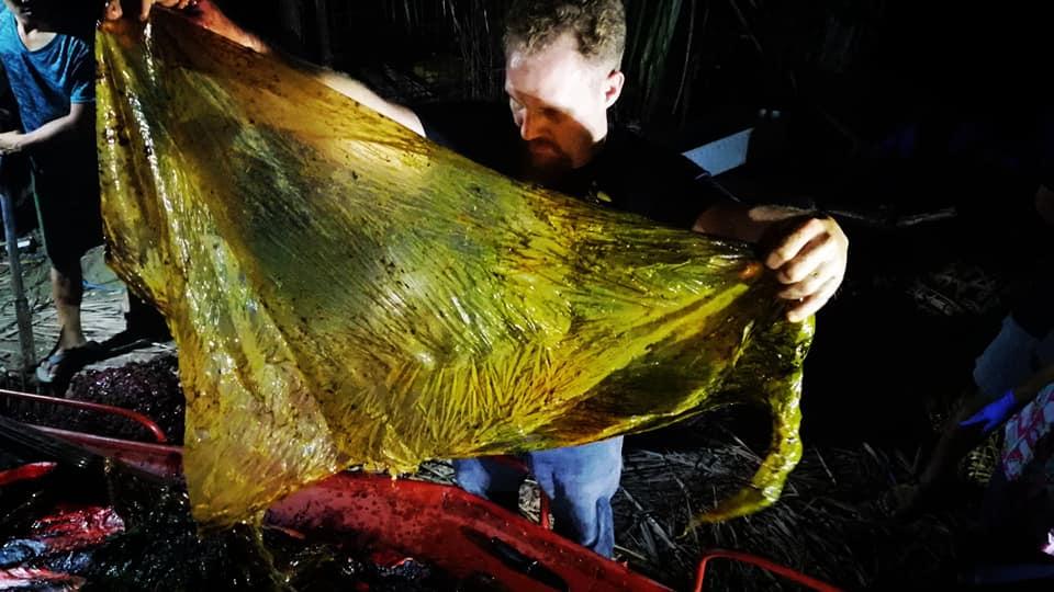 Bolsas plásticas en el estómago de una ballena
