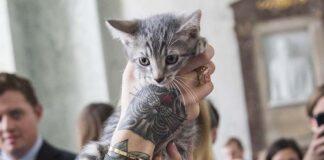 Cientos de gatos y perros sacrificados para experimentos en EE.UU.