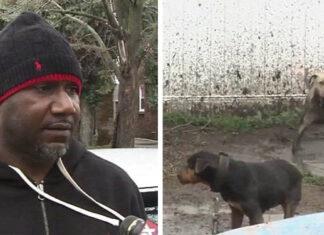 Criador de perros para pelea es atacado por hombres enmascarados