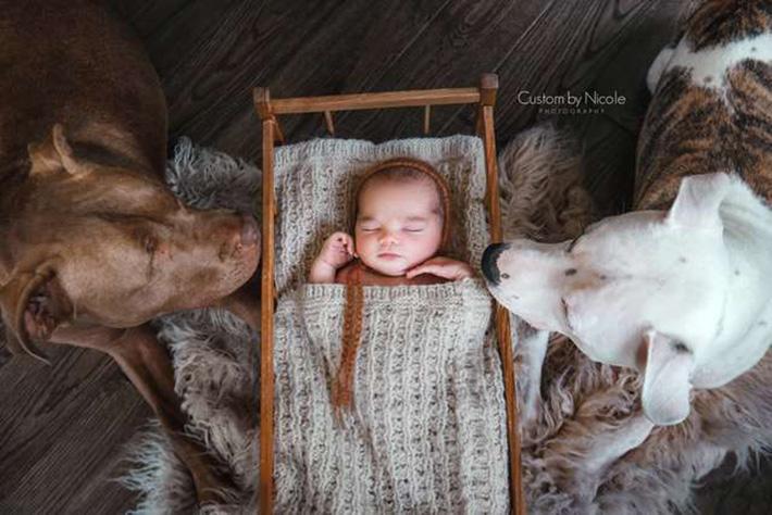 Dawson con sus perros