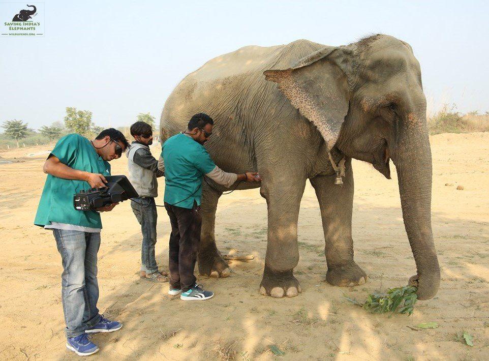 Elefante examinado