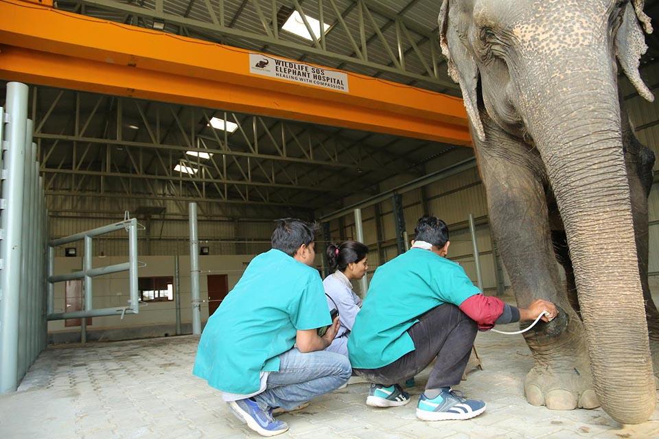 Elefante maltratado