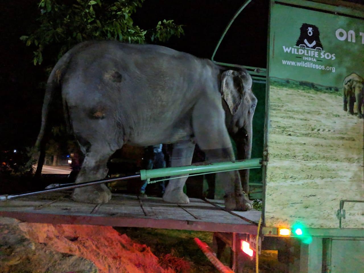 Elefante sube e la ambulancia