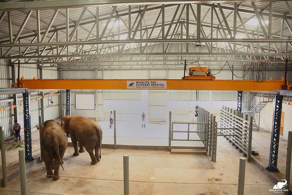 Elefantes en el hospital