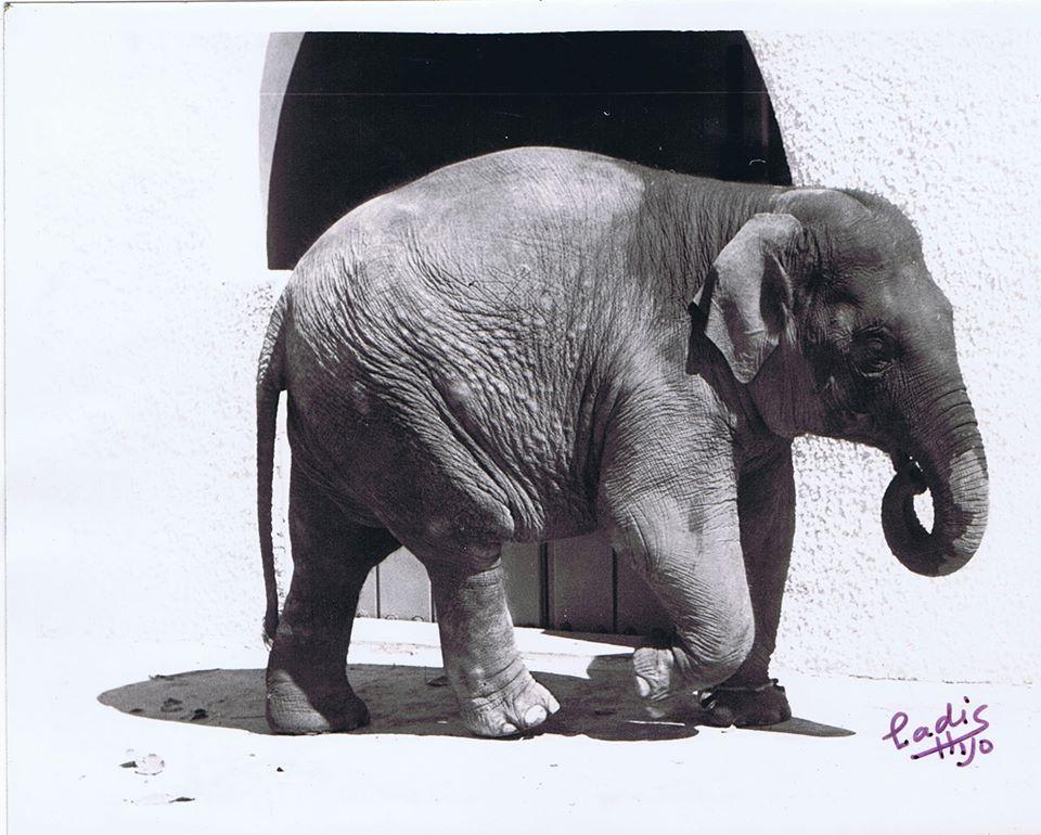 Flavia en zoo
