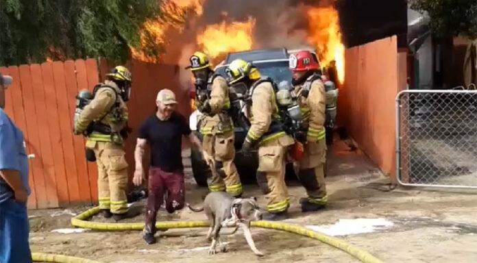 Hombre arriesga su vida para salvar a su perro
