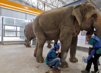 Hospital para elefantes en la India