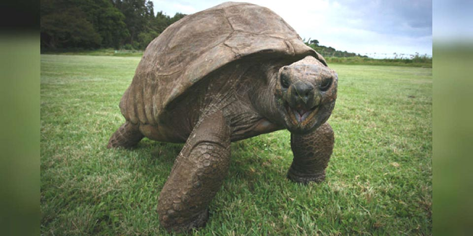Jonathan el animal más antiguo del mundo