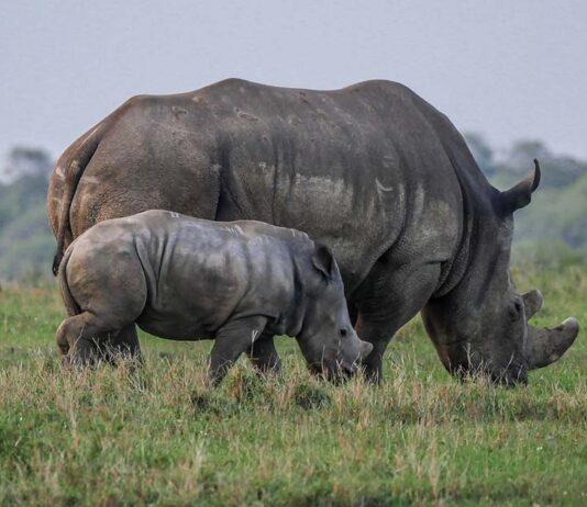 Los cazadores furtivos en Kenia se enfrentaran a la pena de muerte