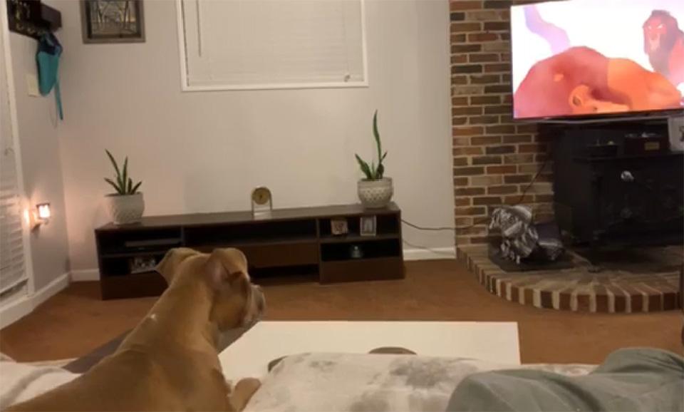 Luna viendo escena triste de El Rey León