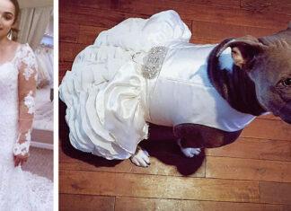 Mujer compra vestido especial de bodas para su pitbull