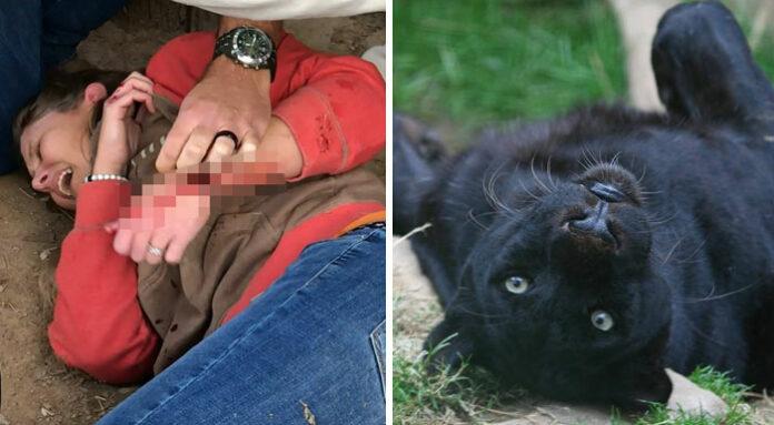 Mujer es atacada por un jaguar en el zoológico