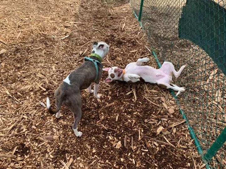 Murphy y Liza jugando