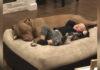 Niño enfermo solo quiere ser consolado por su pitbull rescatado