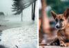 Nuevo proyecto de ley castigará a las personas que abandonen a sus perros durante huracanes