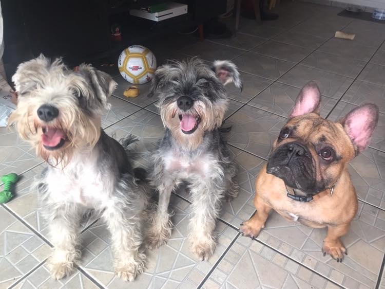Otavio y sus hermanos