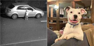 Perrito abandonado no puede dejar de sonreír después de ser adoptado