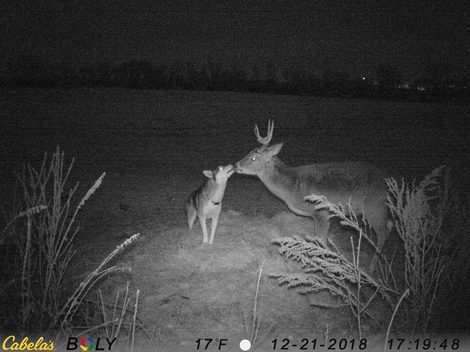 Perrito besando al ciervo salvaje