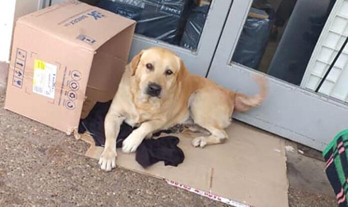Perrito fiel espera a su dueño fuera del hospital