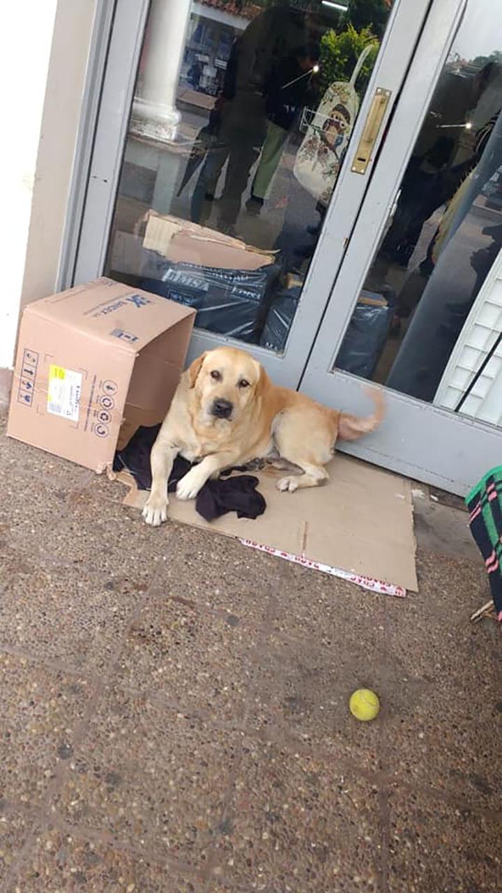 Perrito fiel esperando a su dueño