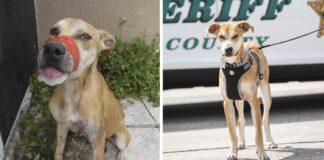 Perrito fue encontrado con su hocico sellado ahora es un valiente oficial