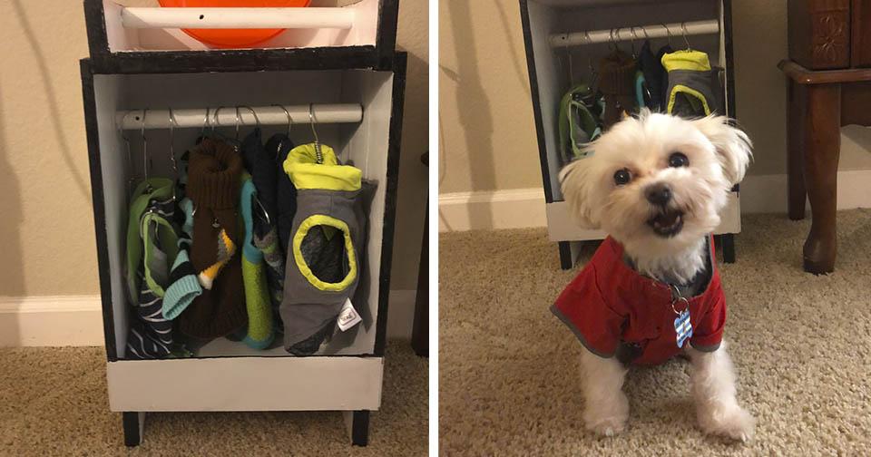 Perrito que ama la ropa tiene un armario para el