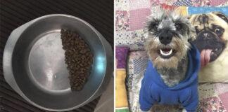 Perrito rescatado deja el tazón de comida medio lleno