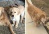 Perro ciego conoce a un cachorro que lo guia y ahora son mejores amigos