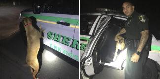 Perro perdido busca ayuda de policías para regresar a casa