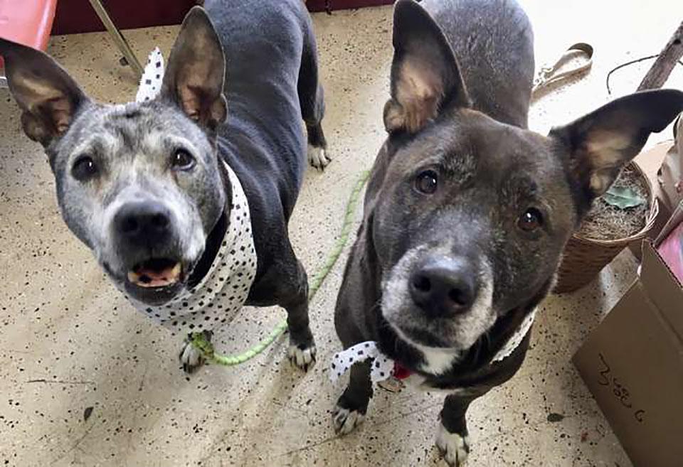 Perros Petco en su hogar de acogida en Michigan